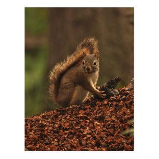 Red Squirrel on Debris Pile Postcard