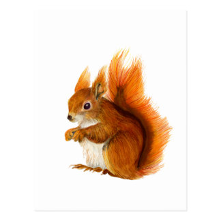 Red Squirrel Painted in Watercolor Wildlife Art Postcard