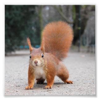 Red Squirrel Photo Art