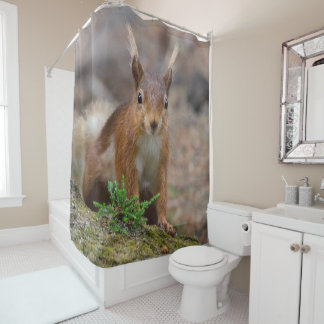 Red squirrel photograph shower curtain