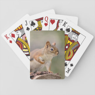 Red Squirrel Playing Cards