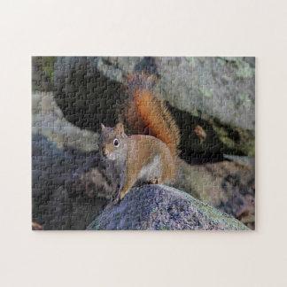 Red squirrel puzzle
