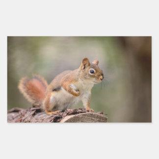 Red Squirrel Rectangular Sticker