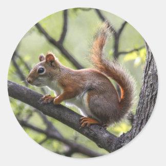 Red Squirrel Round Sticker
