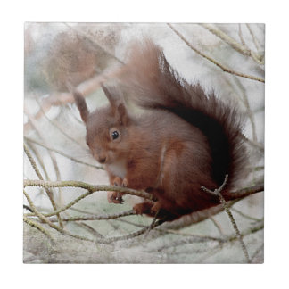 Red Squirrel Small Square Tile