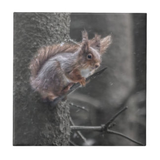 Red Squirrel Tile