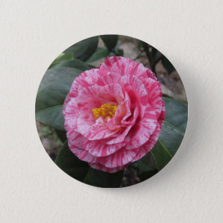 Red streaked white flower of Camellia japonica 6 Cm Round Badge