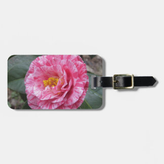 Red streaked white flower of Camellia japonica Luggage Tag
