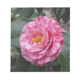 Red streaked white flower of Camellia japonica Notepad