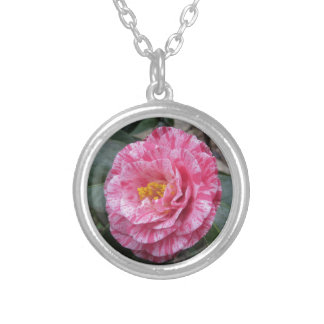Red streaked white flower of Camellia japonica Silver Plated Necklace