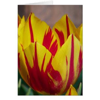 Red Striped Tulip Card