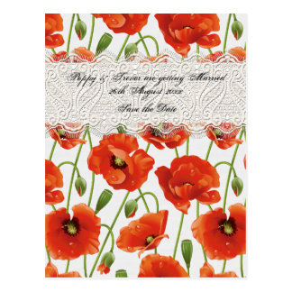 Red Summer Poppy Postcard