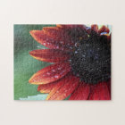 Red Sunflower Petals And Rain Drops Jigsaw Puzzle