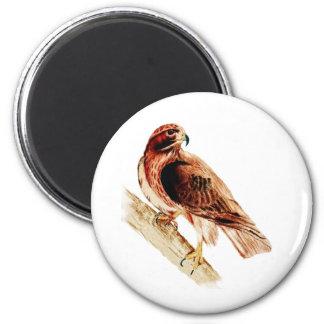 Red Tail Hawk 6 Cm Round Magnet