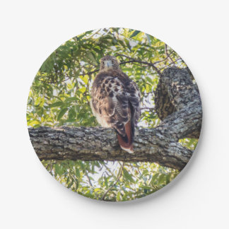 Red Tail Hawk 7 Inch Paper Plate