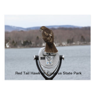 Red Tail Hawk at Codorus State Park Postcard