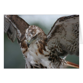 """Red Tail Hawk"" Bird Photo Greeting Card"