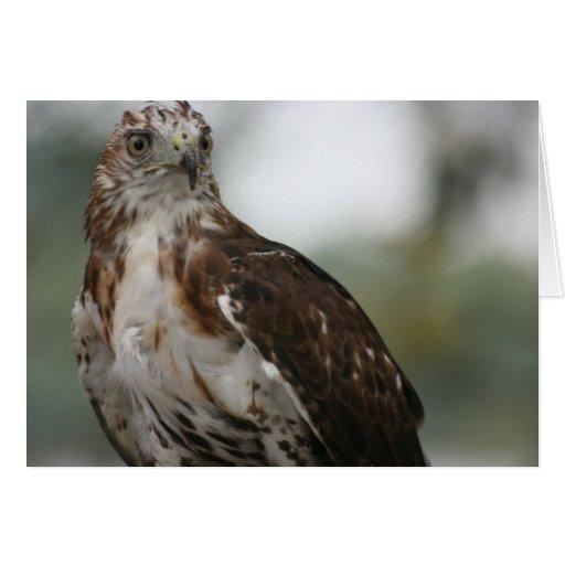 """Red Tail Hawk"" Bird Photo Greeting Card"