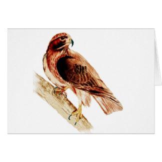 Red Tail Hawk Card