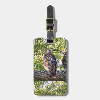 Red Tail Hawk Luggage Tags