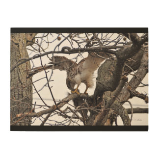 Red-tail Hawk on Wood Wood Canvas