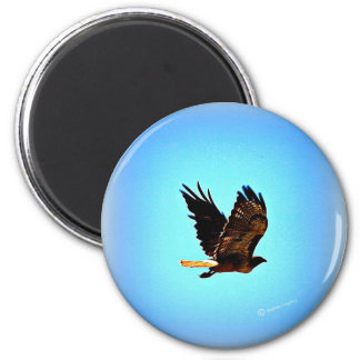 Red Tail Hawk Picture 6 Cm Round Magnet