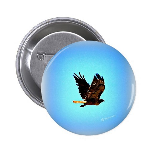 Red Tail Hawk Picture Pinback Buttons