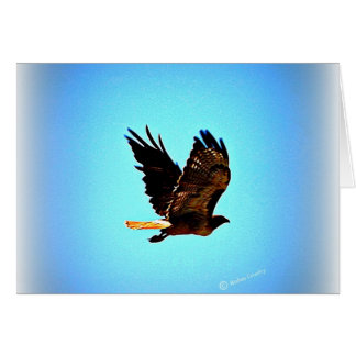 Red Tail Hawk Picture Card