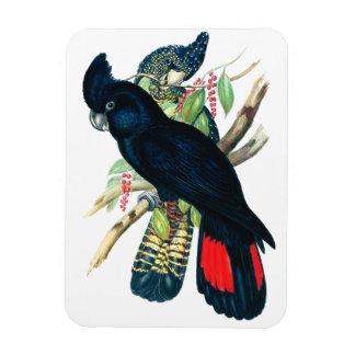 Red tailed, Black (Banksian) Cockatoos. Rectangular Photo Magnet