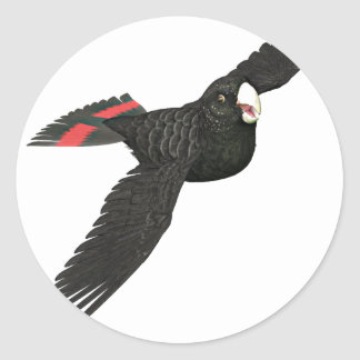 Red Tailed Black Cockatoo Round Sticker