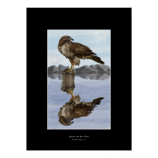 Red-tailed Hawk Art Poster