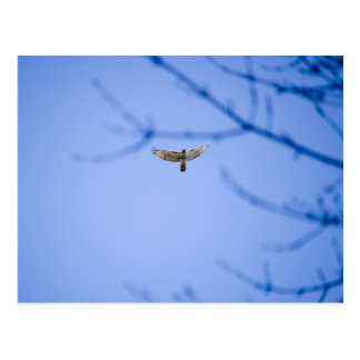 Red Tailed Hawk at Conowingo Dam Postcard