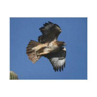 Red-tailed Hawk Canvas Prints