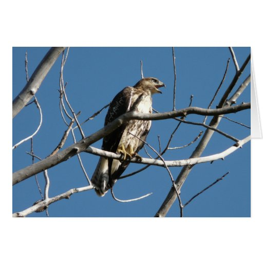 Red-tailed Hawk Greeting Cards