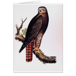 Red Tailed Hawk Greeting Card