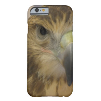Red-tailed hawk barely there iPhone 6 case