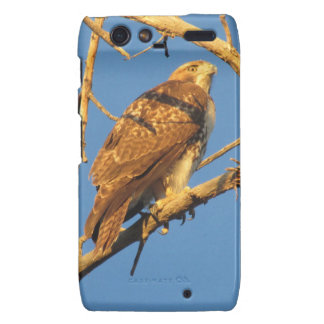 Red Tailed Hawk Droid RAZR Case