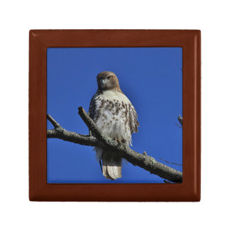 Red-tailed Hawk Gift Box