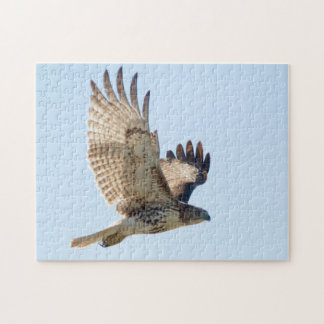 Red Tailed Hawk in fligh Jigsaw Puzzle