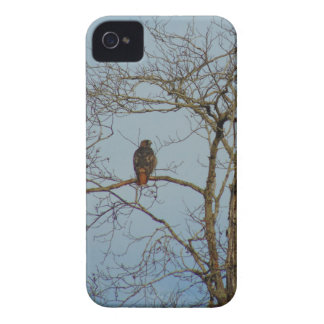 Red Tailed Hawk iPhone 4 Case-Mate Case