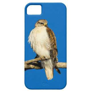 Red-Tailed Hawk Iphone Case iPhone 5 Cases