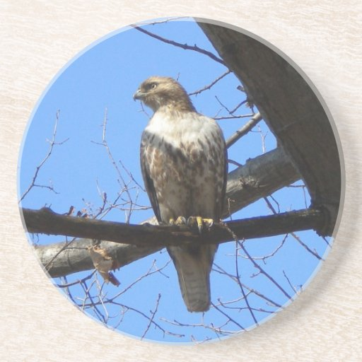 Red Tailed Hawk (Juvenile) Coasters