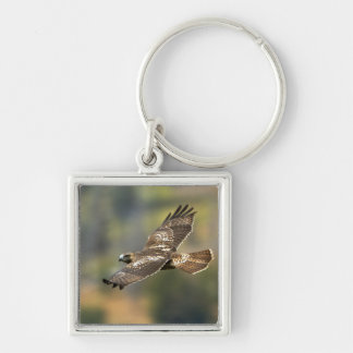 Red-tailed Hawk Key Ring
