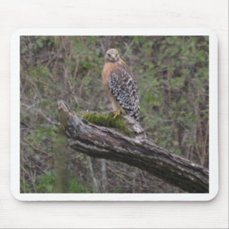 Red Tailed Hawk on Limb Mouse Pads