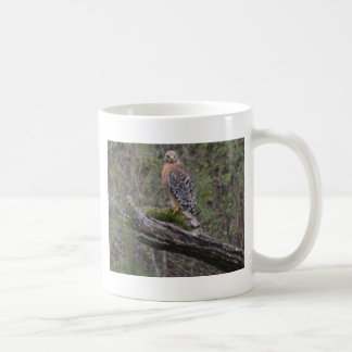 Red Tailed Hawk on Limb Mugs