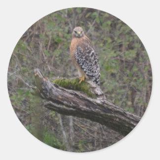 Red Tailed Hawk on Limb Round Sticker