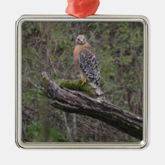 Red Tailed Hawk on Limb Silver-Colored Square Decoration