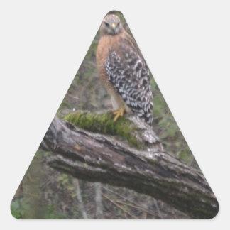 Red Tailed Hawk on Limb Triangle Sticker