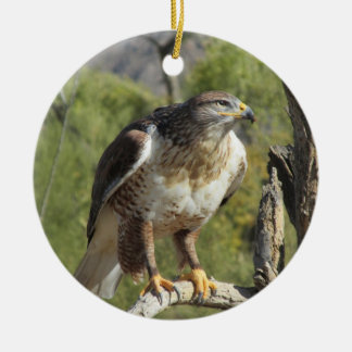 Red Tailed Hawk Ornament