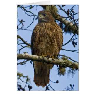 Red Tailed Hawk Photo Greeting Card